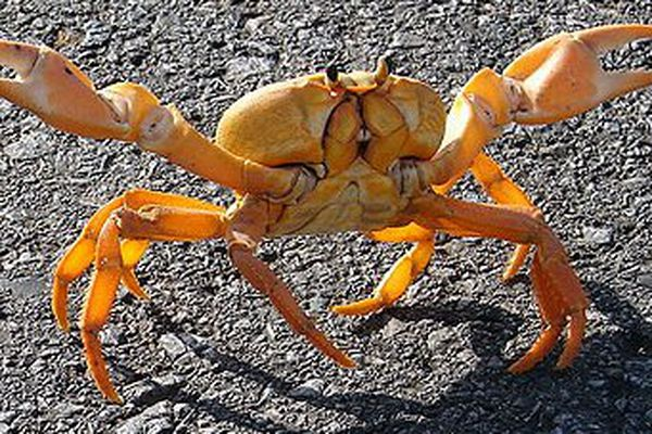 crabes 2014