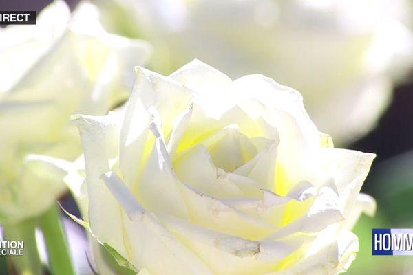 La rose blanche, symbole de chacune des victimes