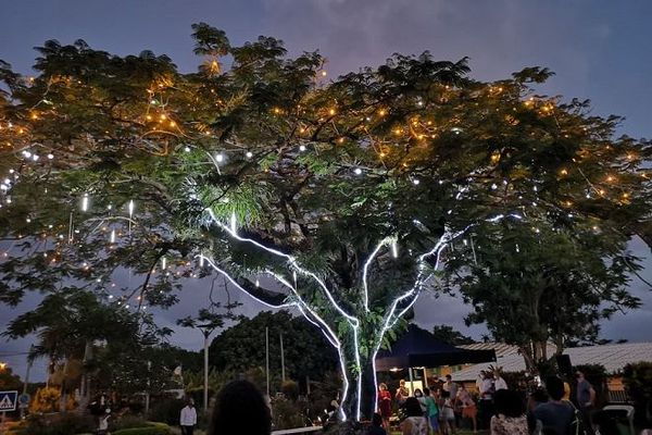 Situé dans la cour de la mairie de Saint-Philippe, un flamboyant vient d'être classé arbre remarquable de France.