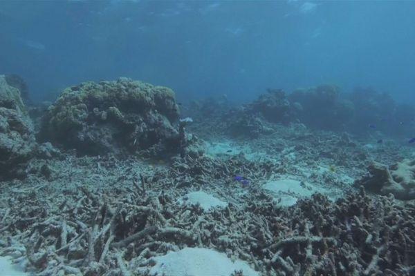 Biodiversité : les experts tirent la sonnette d'alarme
