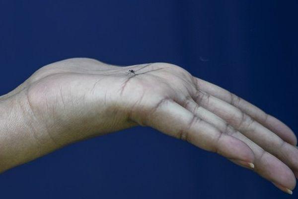 Zika: une mutation en 2013 à l'origine des malformations congénitales