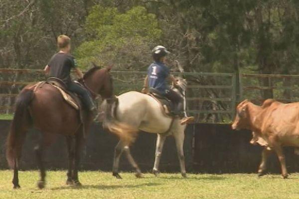 équitation de travail : formation stockman