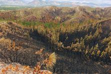 Une zone incendiée sur la tribu de Nékoué à Houaïlou en août 2021