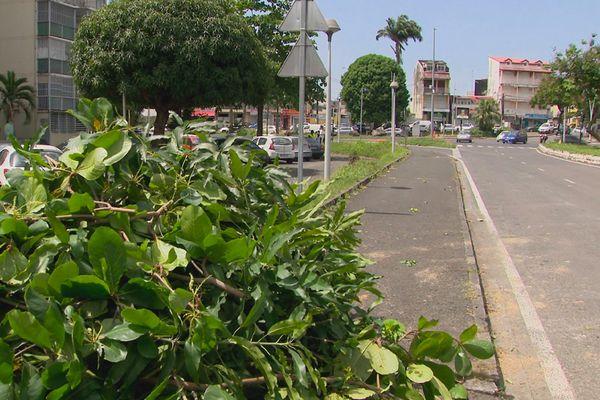Nettoyage de Pointe-à-Pitre 2 - initiatives d'Outre-mer Guadeloupe