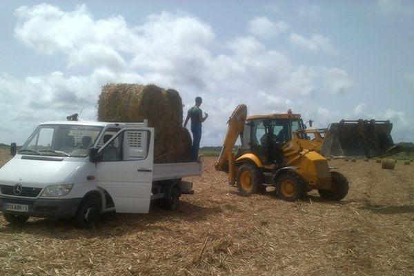 Cap Viande au secours des agriculteurs