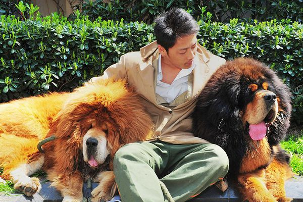chien plus cher monde