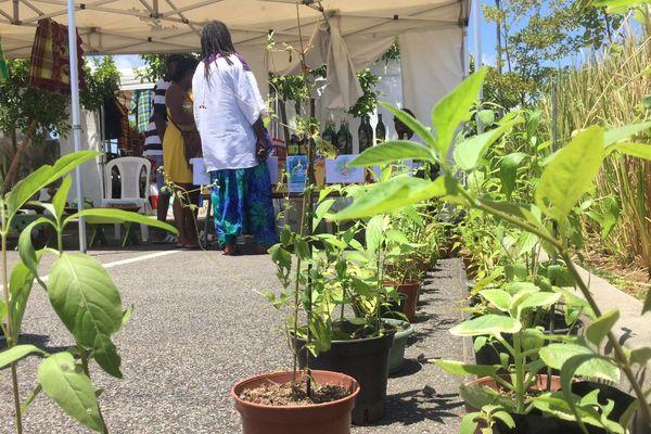 Des plantes à vendre