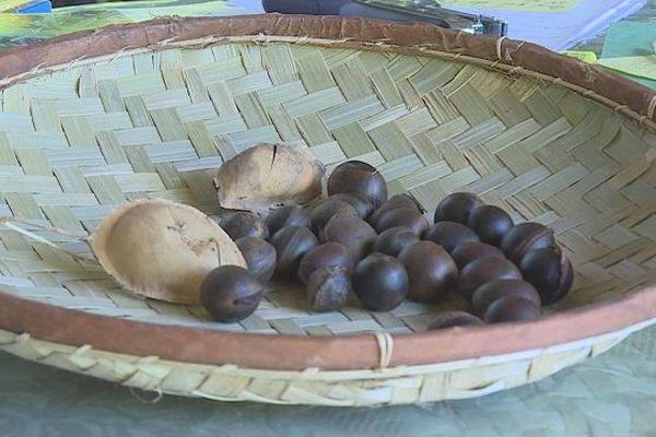 Les graines de kadok pourraient disparaître.