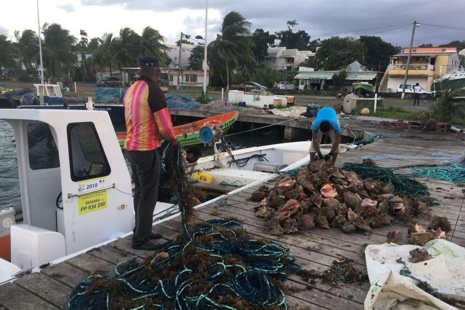 Guadeloupe : Saison de pêche du lambi annulée - Guadeloupe la 1ère