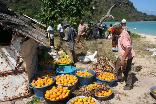 Cueillette oranges îlot Mtsamboro