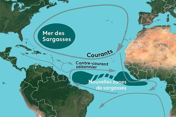 Nouvelle mer des sargasses