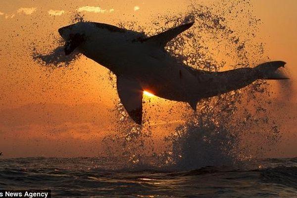 requin volant