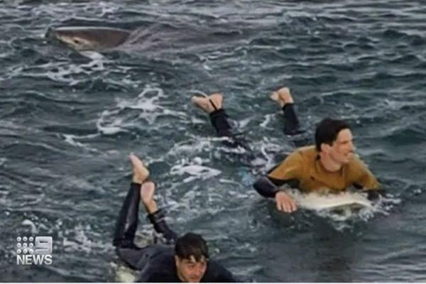 Un surfeur français échappe à un requin aux poings en Australie