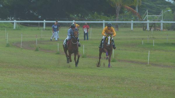 course chevaux pareo