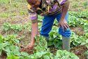 L'agriculteur Alexandre Terne milite pour la souveraineté alimentaire en Martinique