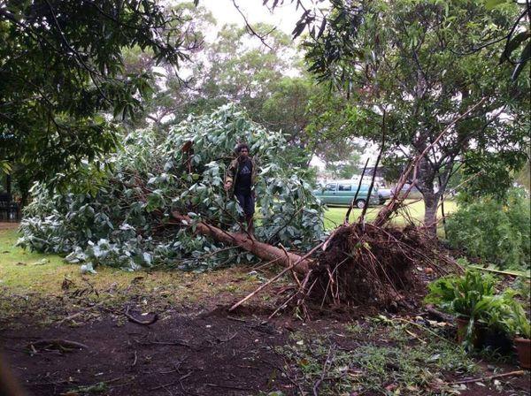Arbre tombé Waihmenë Lifou cyclone Cook (10 avril 2017)