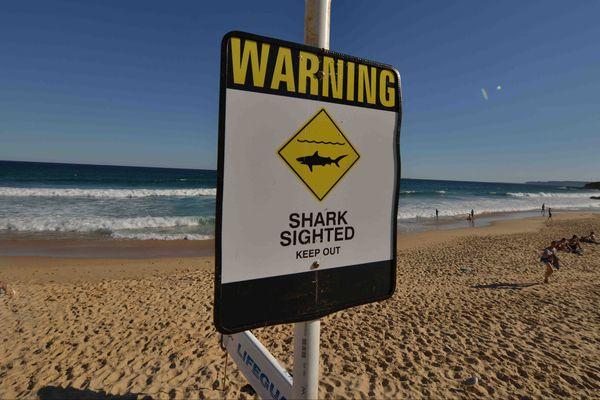 Des drones pour lutter contre les attaques de requins en Australie