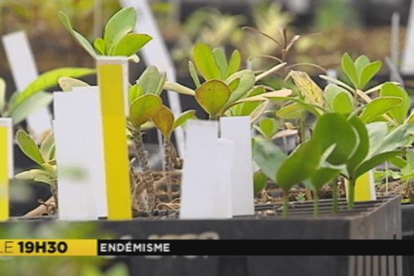 Espèces endémiques en Nouvelle-Calédonie