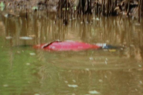 Mort Mayotte rivière