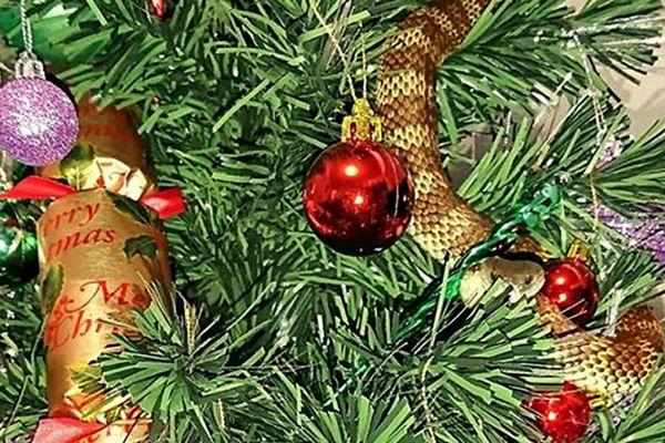 Serpent-tigre dans un sapin de Noël