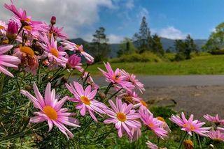 Beau temps et fleurs