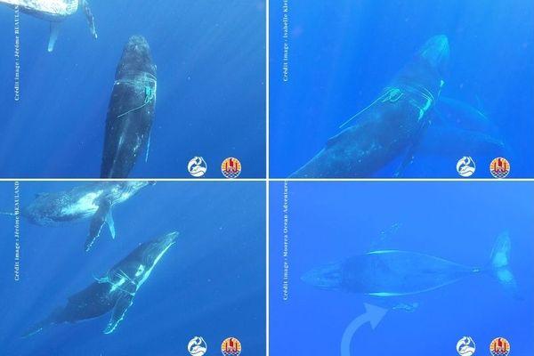 baleines cordages