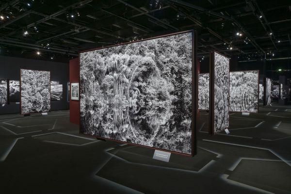 Expo Salgado par Gil Lefauconnier