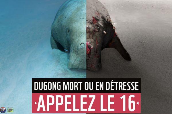 Plan action dugong