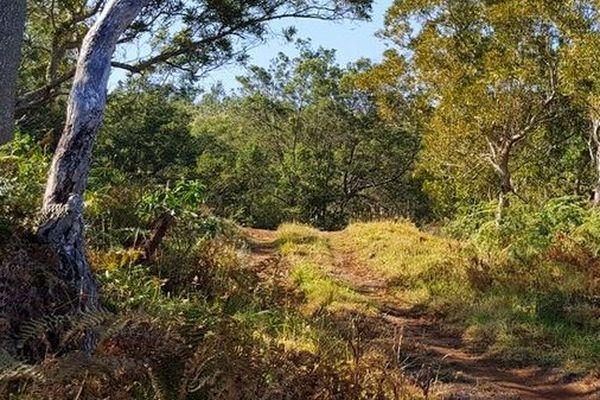 Forêt du Maido