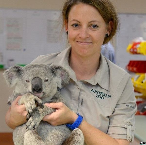 koala timberwolf