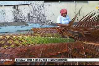Au cœur du fenua : le tressage du niau à Huahine