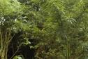 Drogue: 200 plants de zamal saisis dans l'Est
