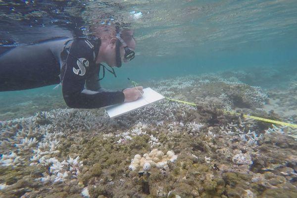 Les coraux blanchissent dans le lagon de Saint-Leu.