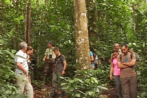 Forêt de Bélizon