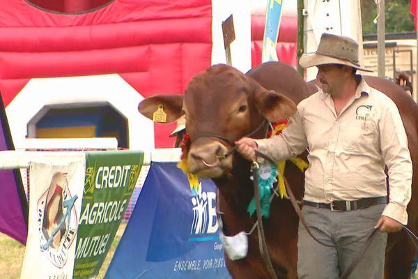 Foire Bourail dimanche présentation bétail