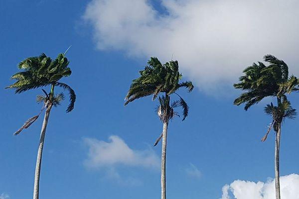 vent palmiers