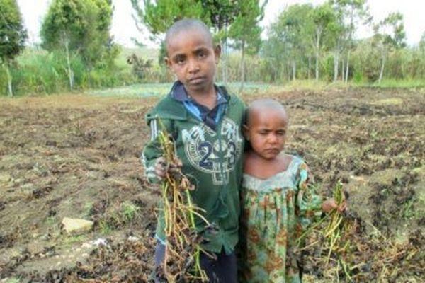 Le gouvernement papou reste prudent et ne confirme aucun décès lié à la sécheresse dans les Hauts-Plateaux.