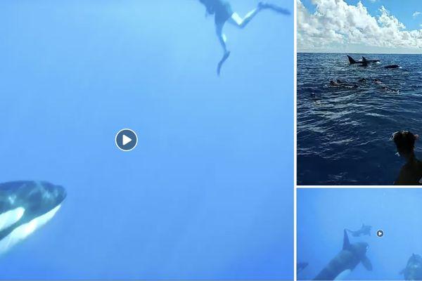 Ils ont nagé avec les orques de Bora Bora !