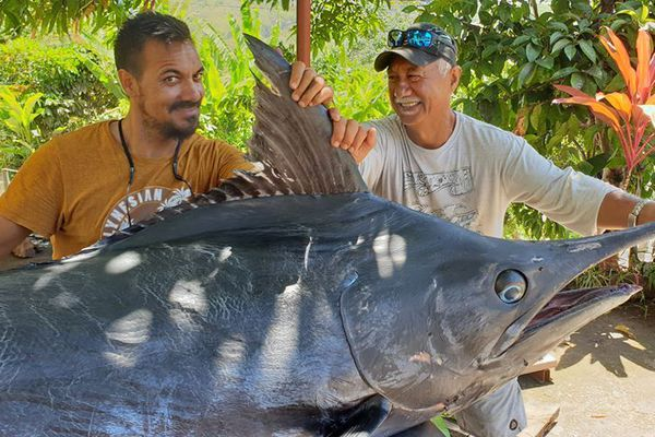 Un espadon de 245 kg pêché aux Marquises