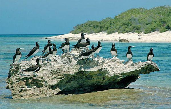 Oiseaux marins NC
