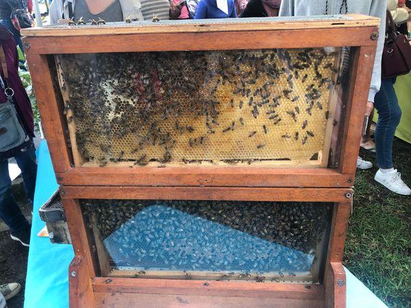 Bee Folies. Miel