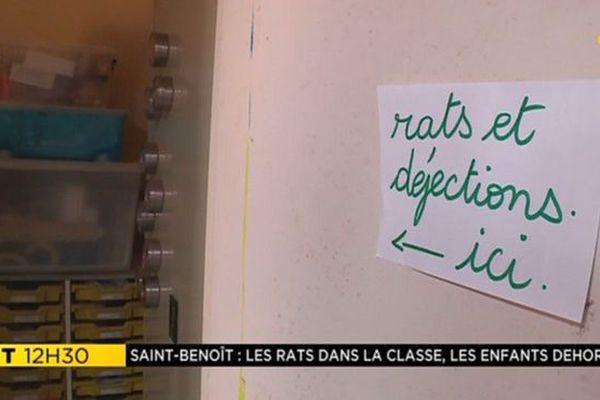 Rats école Beaulieu