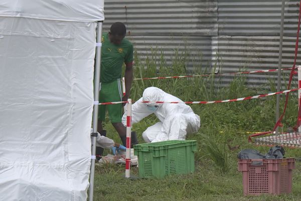 Abattage d'un élevage de poules contaminées à la salmonelle