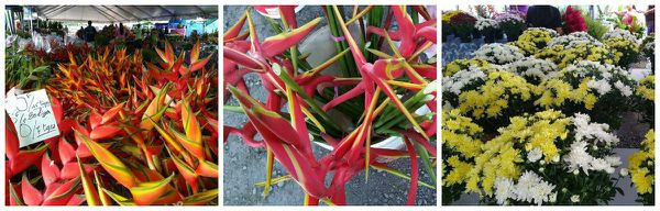 fleurs-pirae