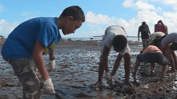 replantation palétuviers mangrove