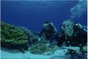 DOCU. Au-delà des récifs coralliens polynésiens, la vie