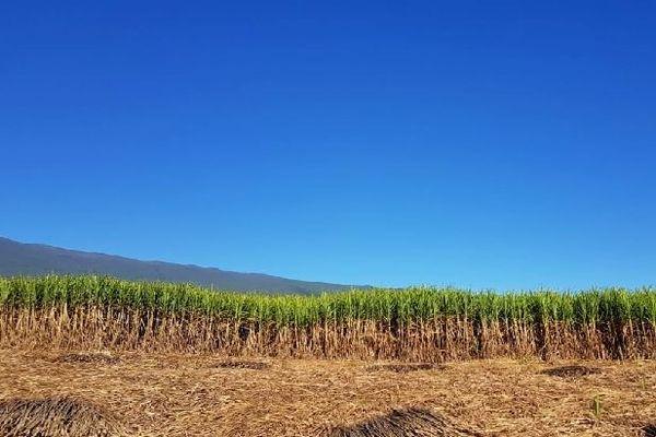 Les cannes sous le ciel bleu