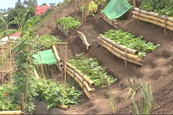 La production de certains légumes suspendue