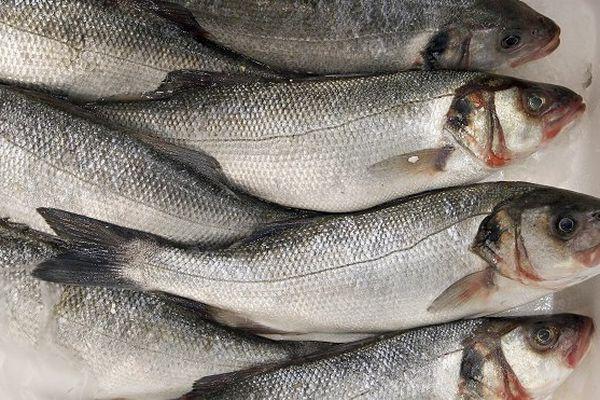 Etude lien entre la consommation de poissons et la maladie de Charcot