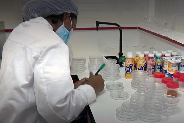 Loi sucre : l'usine SOLAM à Macouria